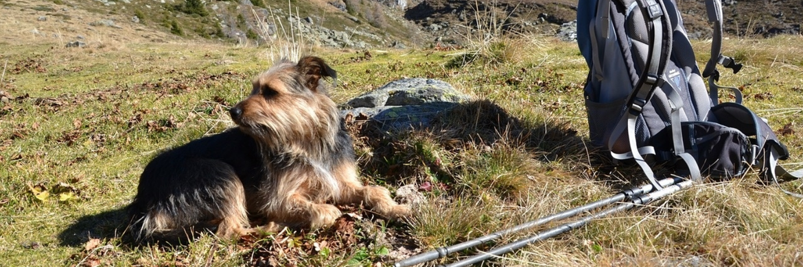 DOGTREKKING-HIKING