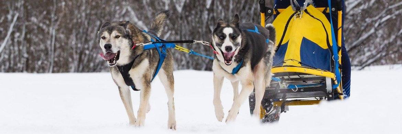 NK Oostenrijk (2e plek) * eigen honden/foto