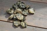 Kabeljauw schijfjes - vis koekjes | 150 gram_