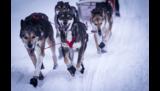 Booties ter bescherming van de hondenpoot