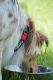 Tagging Pet Collar