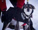 Dog Coat, Neewa