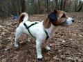 Inlandsis open-back harnas Red - voor kleine honden onder de 15 KG