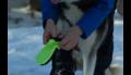 Dog Boot (2 stuks)